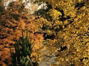 Im goldenen Herbst lohnt sich eine Reise besonders.